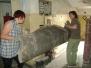 Sprzątanie Domu V
